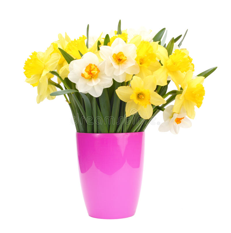 Bouquet de narcisse dans le bac image libre de droits