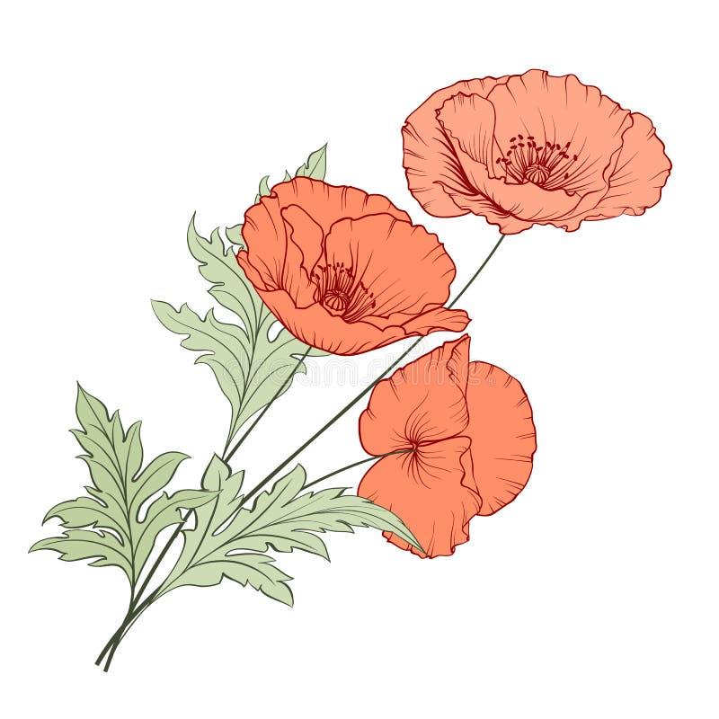 Bouquet de pavot de vintage illustration de vecteur