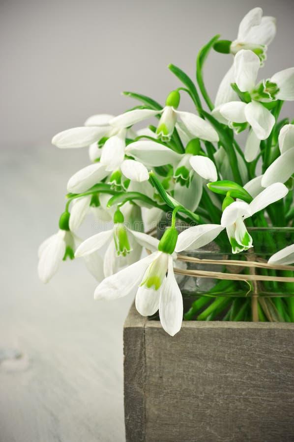 Bouquet de perce-neige photos stock