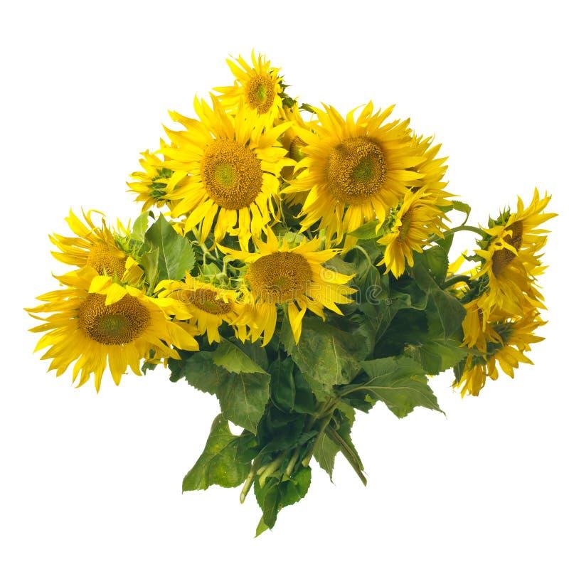 Bouquet de tournesols photo stock