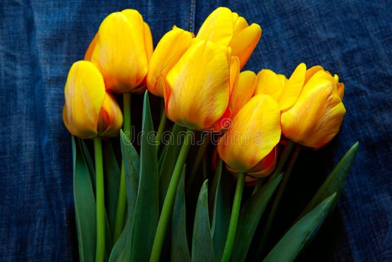 Bouquet de tulipas fotos de stock