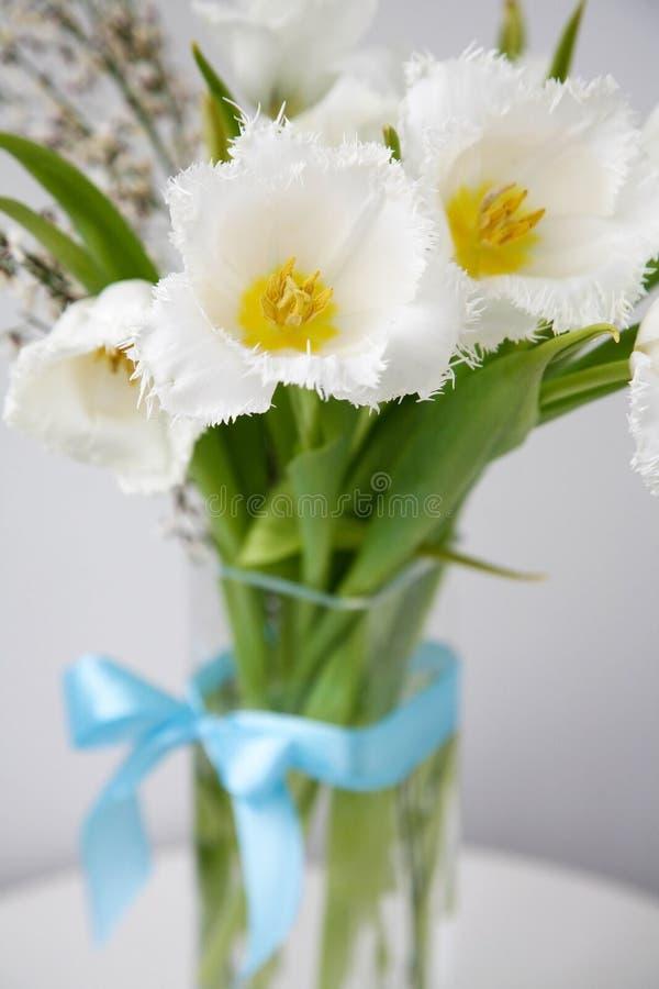 Bouquet de tulipas brancas de borda com laço azul fotografia de stock royalty free
