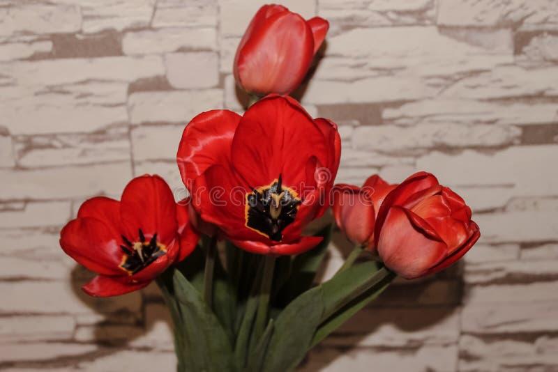 Bouquet de tulipas vermelhas fotografia de stock