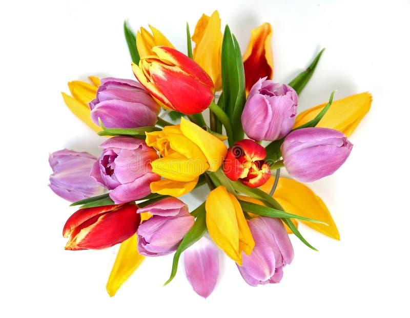 Bouquet de tulipe image libre de droits