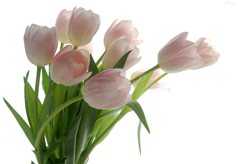Bouquet de tulipe photographie stock libre de droits