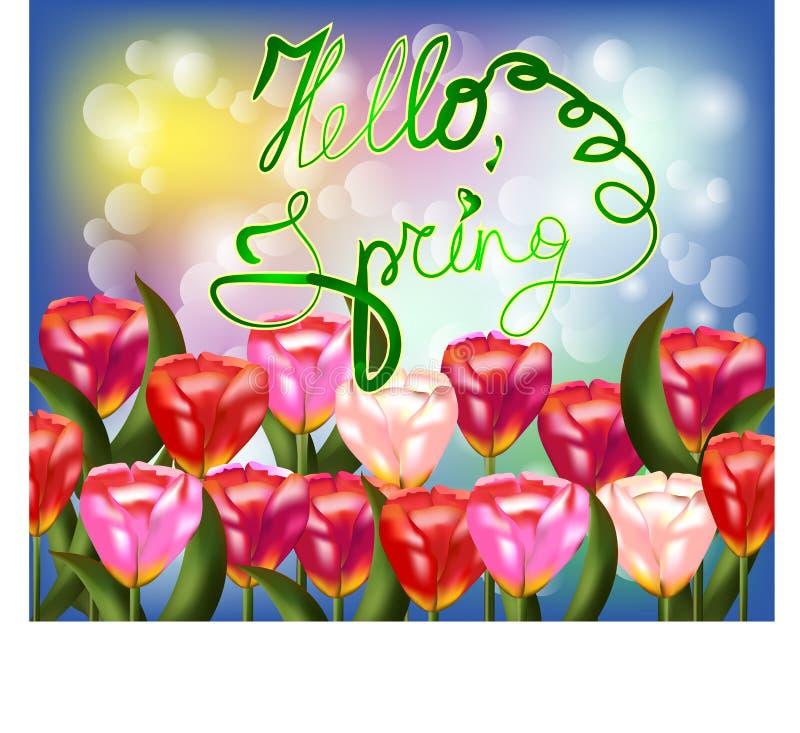 Bouquet de tulipe au-dessus du fond blanc avec le ressort fait sur commande des textes bonjour illustration stock