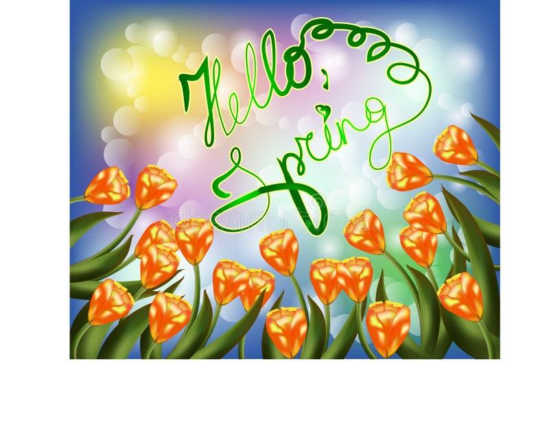 Bouquet de tulipe au-dessus du fond blanc avec le ressort fait sur commande des textes bonjour illustration libre de droits
