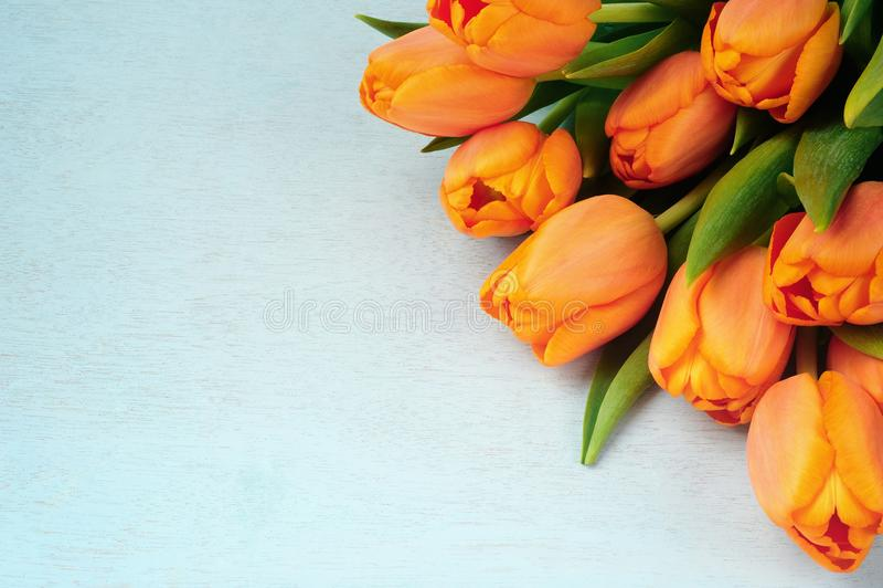 Bouquet de tulipe sur le fond bleu image libre de droits