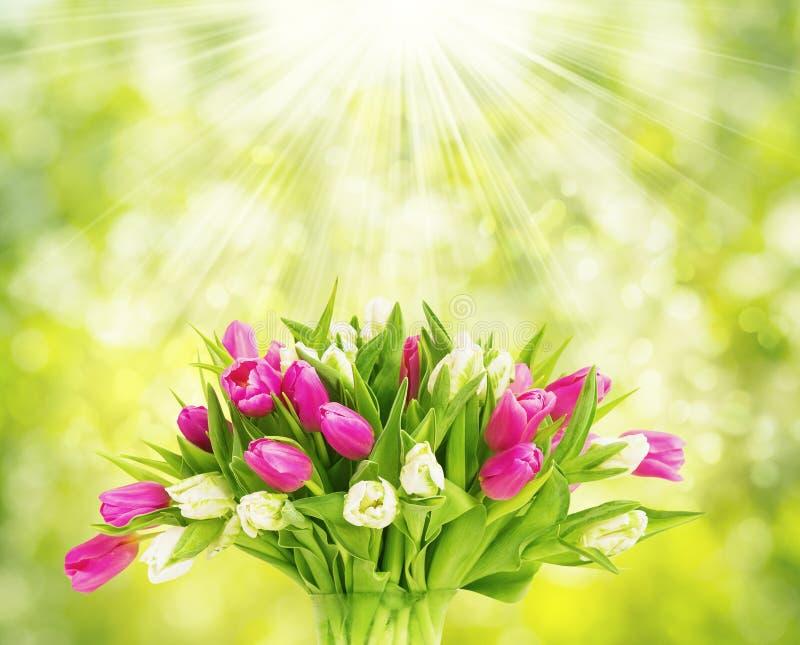 Bouquet de tulipes sur le vert, fleurs de tulipes de ressort photo stock