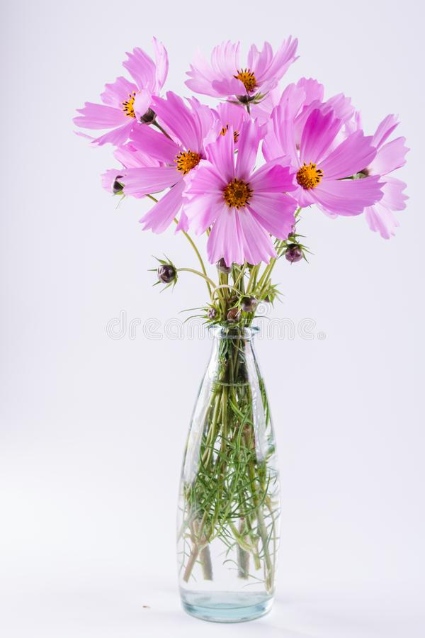Bouquet Of Delicate Pink Cosmos Flowers In Glass Vase Stock Photo ...