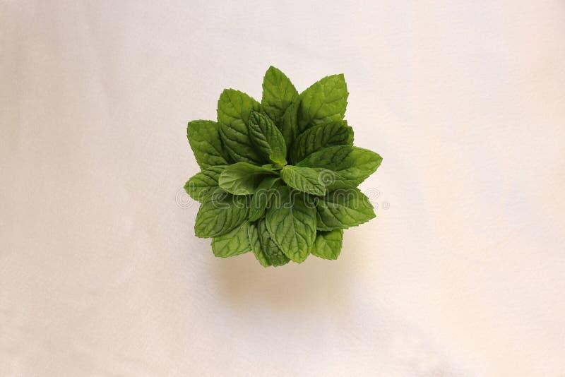 Bouquet des feuilles en bon état images stock
