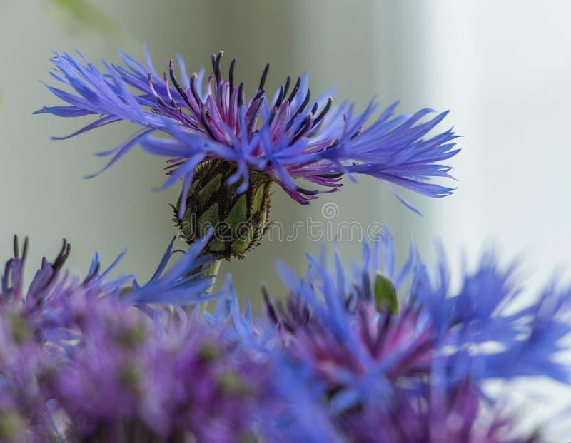 Bouquet des fleurs bleues Une fleur se tient du groupe photo stock