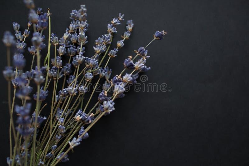 Bouquet des fleurs de lavande d'isolement sur le fond noir image stock