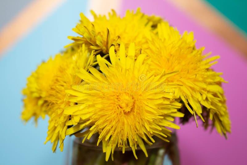 Bouquet des fleurs de pissenlit de taraxacum dans un vase en verre sur un fond coloré Copiez l'espace images stock