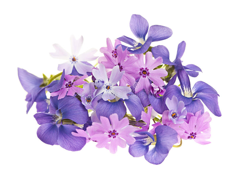 Bouquet des fleurs de source images stock