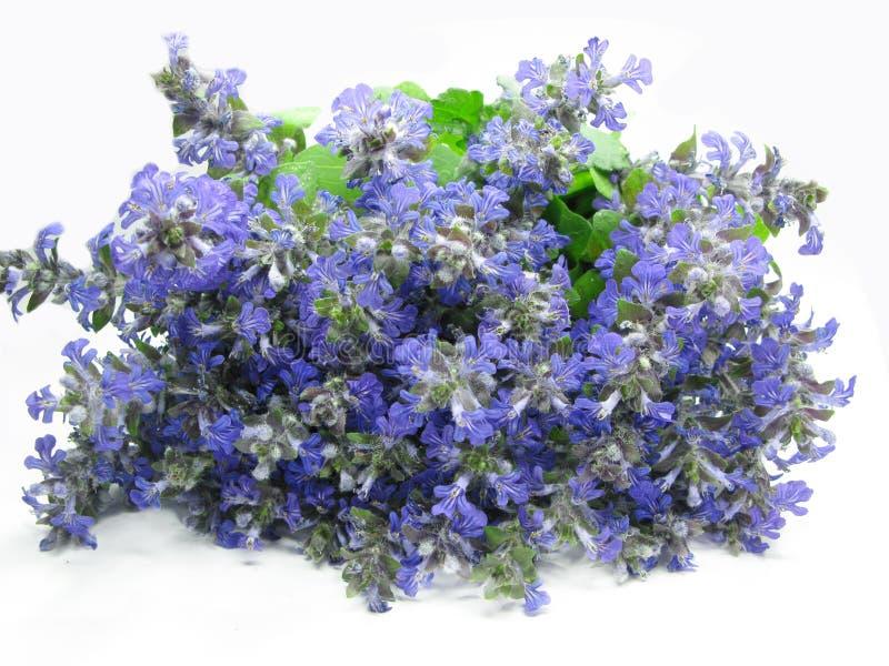 Bouquet des fleurs de violette de zone photo libre de droits