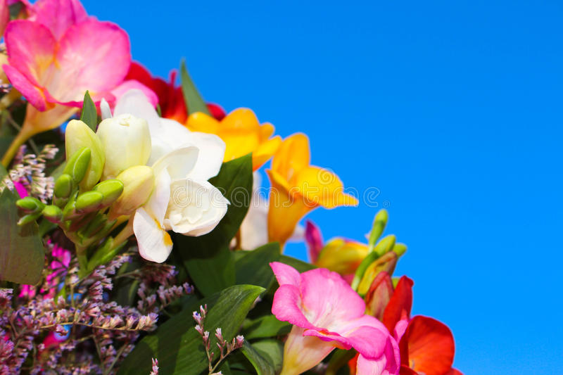 Bouquet des fleurs du fresia sur le fond du ciel bleu image stock