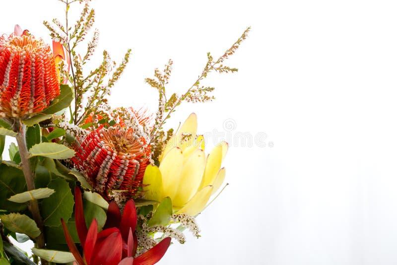 Bouquet des fleurs indigènes avec le banksia rouge et le protea jaune images libres de droits