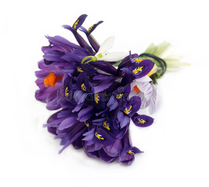 Bouquet des fleurs pourprées photo stock