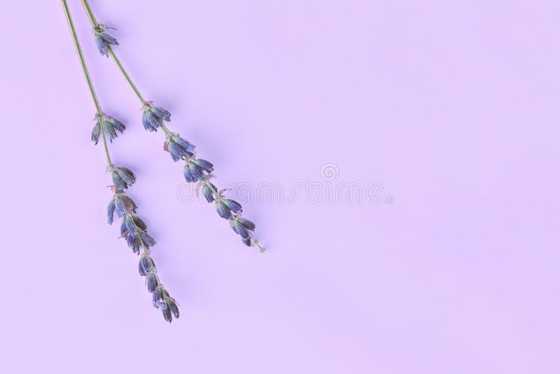 Bouquet des fleurs pourpres lilas violettes de lavande disposées sur le fond de table Vue supérieure, moquerie étendue plate, l'e photo stock