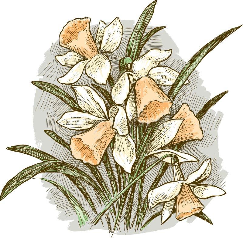 Bouquet des jonquilles illustration libre de droits