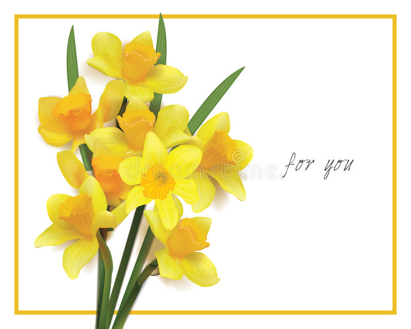 Bouquet des jonquilles jaunes sur un fond blanc image stock