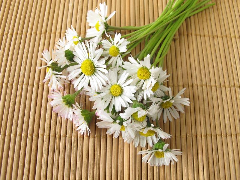 Bouquet des marguerites images stock