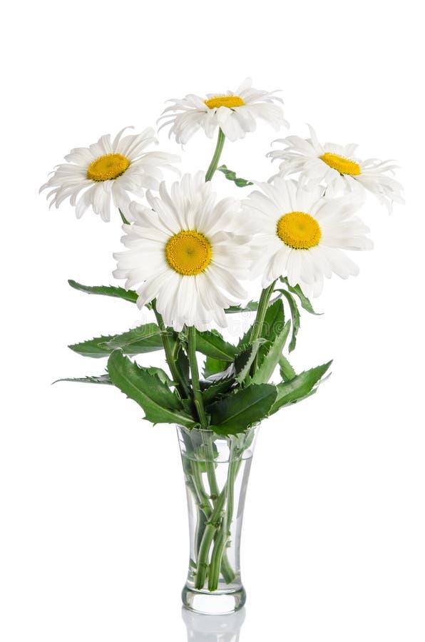 Bouquet des marguerites dans le vase en verre image stock