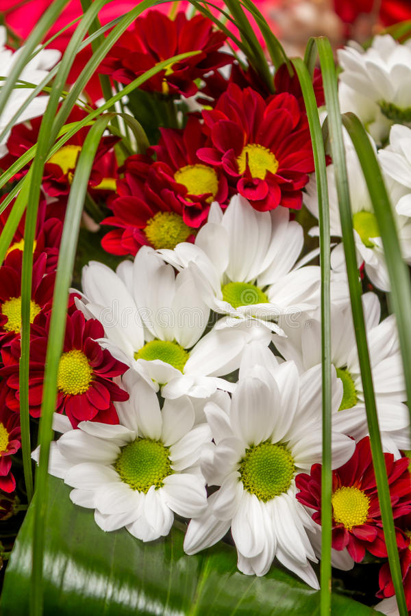 Bouquet des marguerites des prés image stock