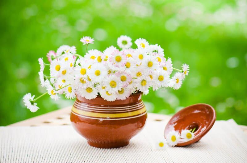 Bouquet des marguerites sensibles dans le pot à la table