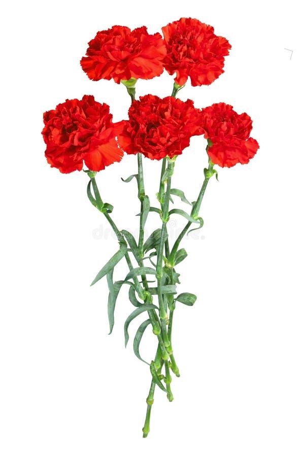 Bouquet des oeillets photo stock