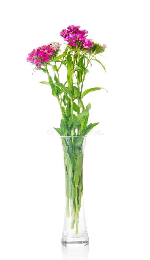 Bouquet des oeillets dans le verre transparent photo stock