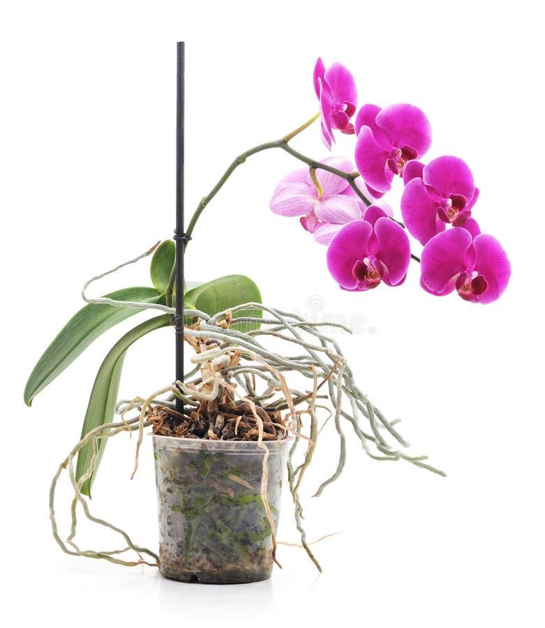 Bouquet des orchidées photo stock