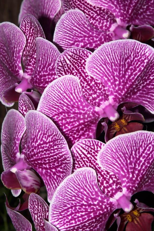 Bouquet des orchidées image libre de droits