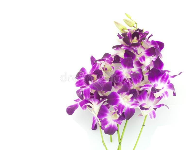 Bouquet des orchidées pourpres d'isolement sur le fond blanc image stock