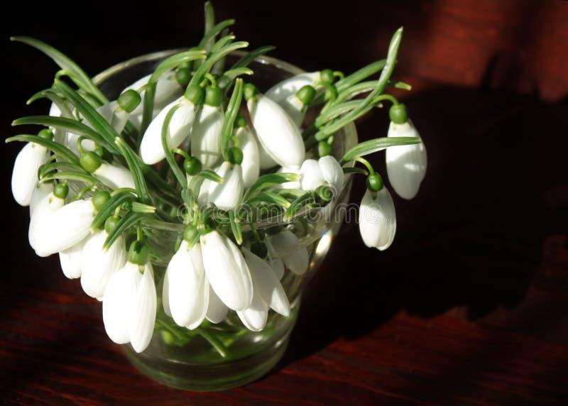 Bouquet des perce-neige dans un vase en verre sur une table en bois dans la lumière de matin du soleil photos libres de droits