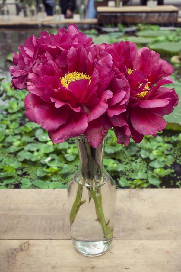 Bouquet des pivoines de rose et de Bourgogne dans un vase en verre, sur une table en bois photo stock
