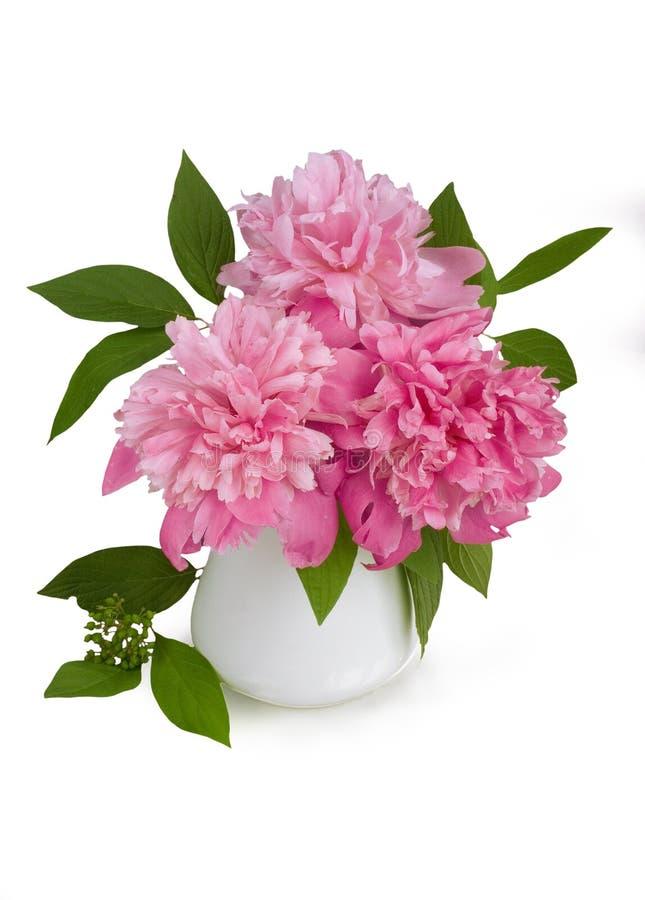Bouquet des pivoines roses dans un vase sur un fond blanc image stock