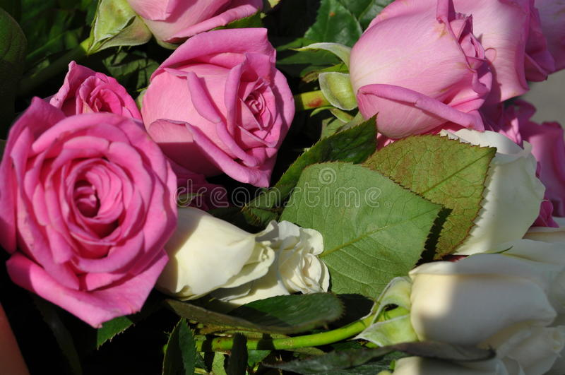 Bouquet des roses photo stock