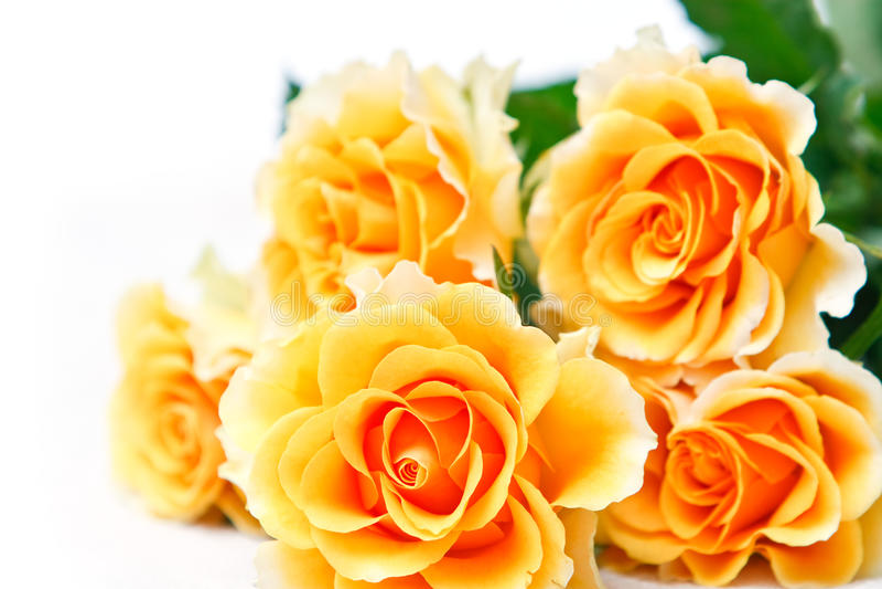 Bouquet des roses jaunes photo stock