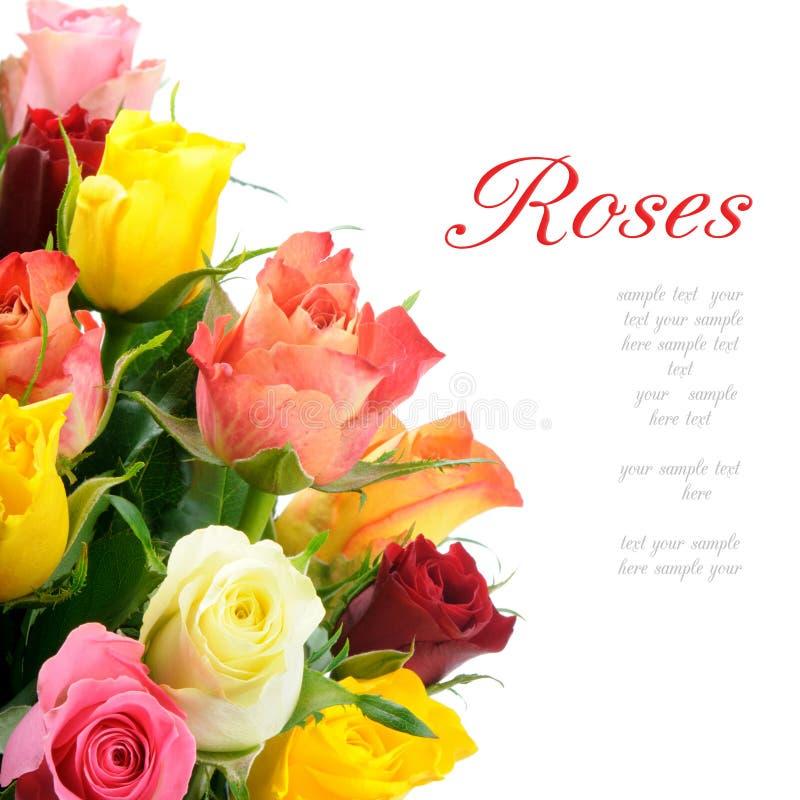 Bouquet des roses multicolores images libres de droits