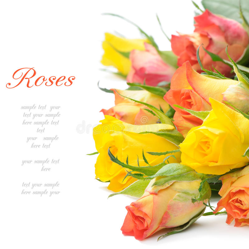 Bouquet des roses multicolores images libres de droits