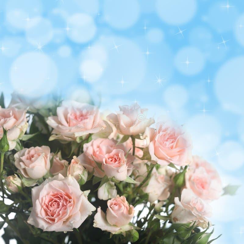 Bouquet des roses roses photos stock