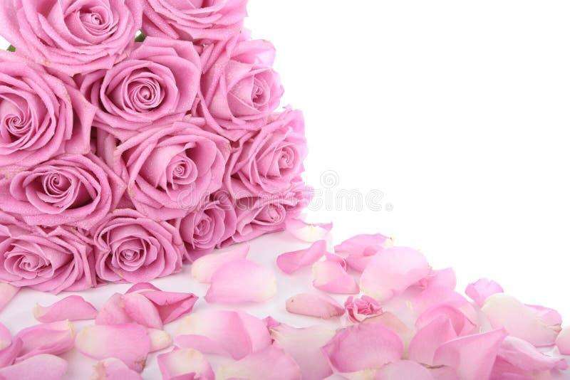 Bouquet des roses roses au-dessus du blanc images libres de droits