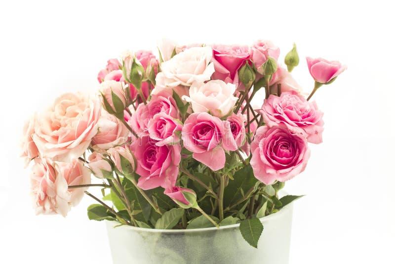 Bouquet des roses roses d'isolement sur le blanc image libre de droits