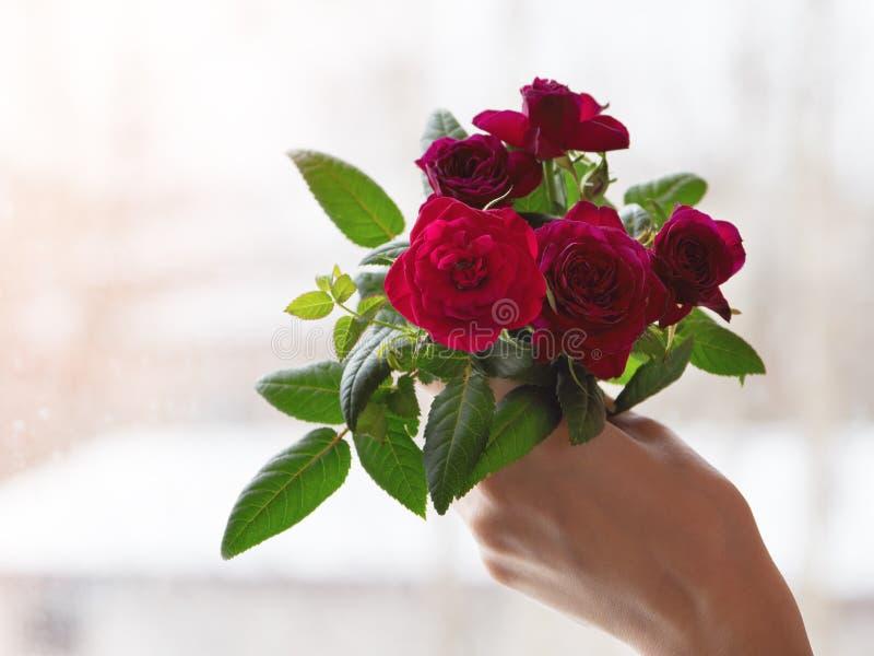 Bouquet des roses rouges à disposition contre la fenêtre photos libres de droits