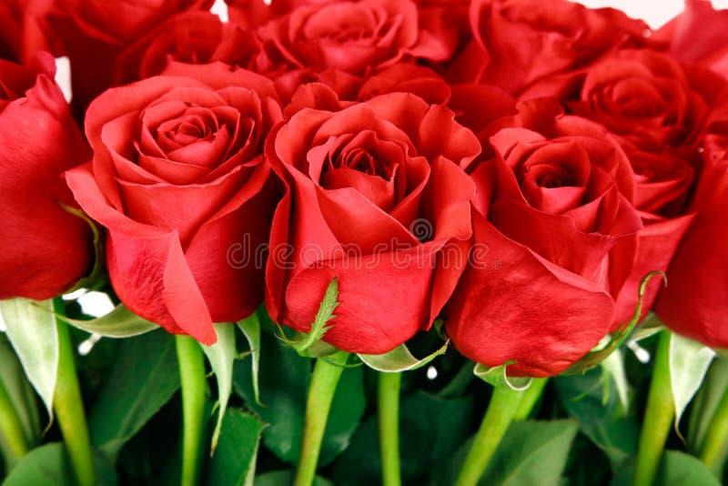 Bouquet des roses rouges image stock