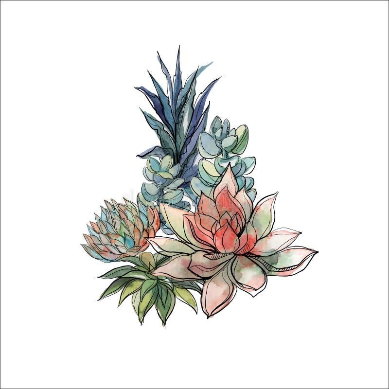 Bouquet des succulents Composition florale pour la conception watercolor dessins Vecteur illustration de vecteur