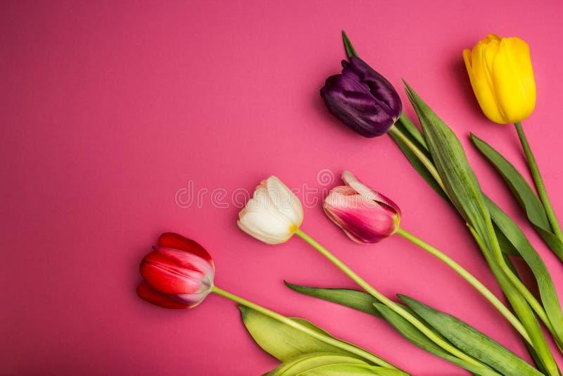 Bouquet des tulipes colorées sur un fond rose L'espace pour le texte photos stock