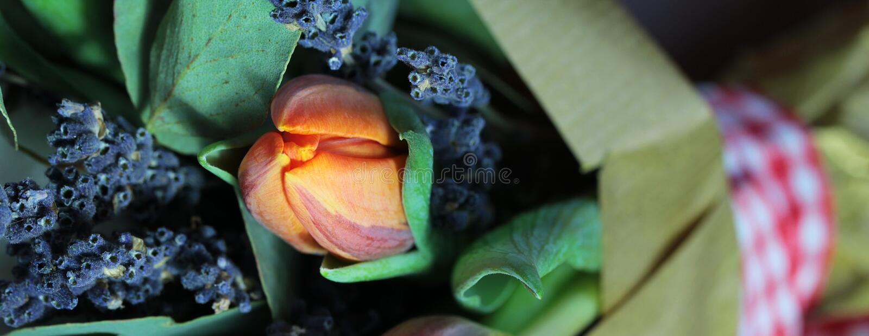 Download Bouquet Des Tulipes, Eucalyptus, Lavande Photo stock - Image du groupe, lavande: 77160174